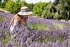 Lavender Farm 254