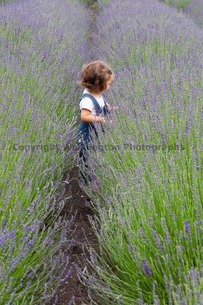 Lavender Farm 102