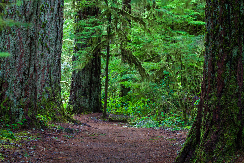 Olympic NP Trail