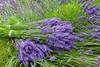 Lavender Farm 67