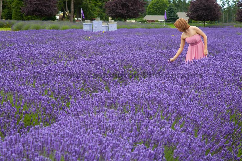 Lavender Farm 150