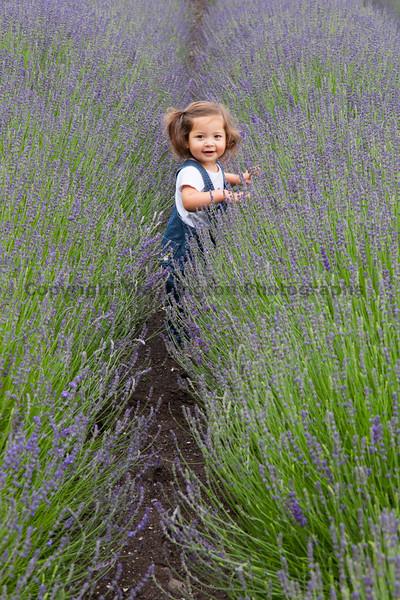 Lavender Farm 103