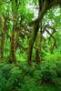 Hoh Rain Forest 26