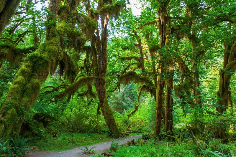 Hoh Rain Forest 35