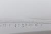 Kalaloch Fog 13
