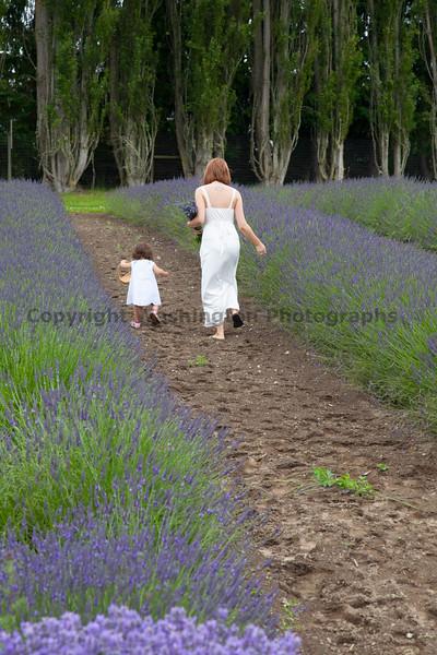 Lavender Farm 134