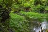Hoh Rain Forest 182