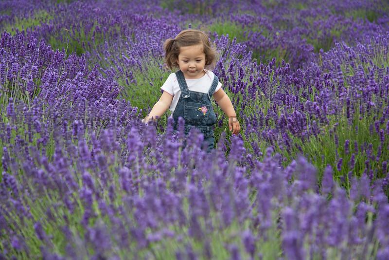 Lavender Farm 107
