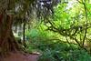 Hoh Rain Forest 10
