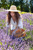 Lavender Farm 261