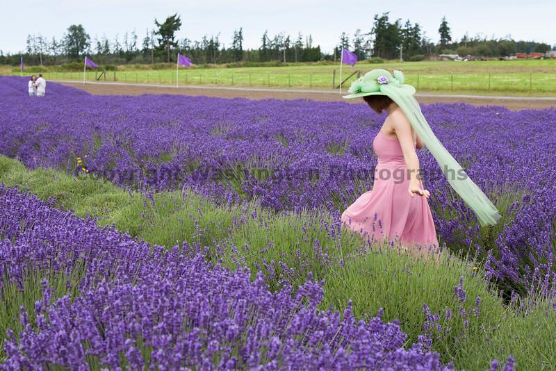 Lavender Farm 163