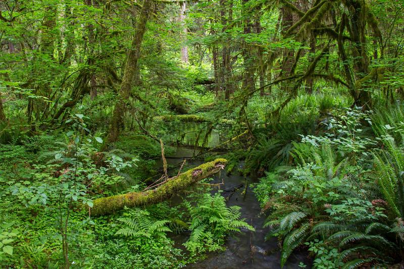 Hoh Rain Forest 164