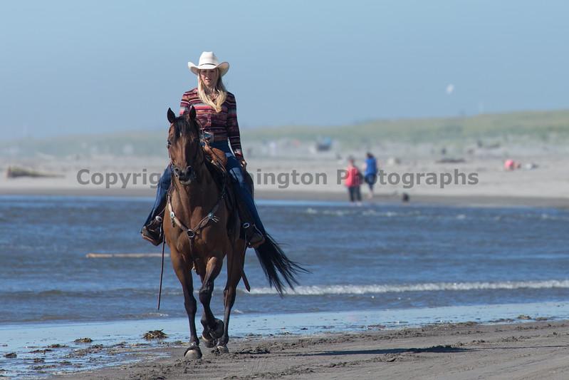 Long Beach Horseback Riding 35