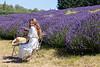 Lavender Farm 308
