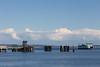 Port Townsend Ferry 19