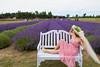 Lavender Farm 156