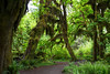 Hoh Rain Forest 133