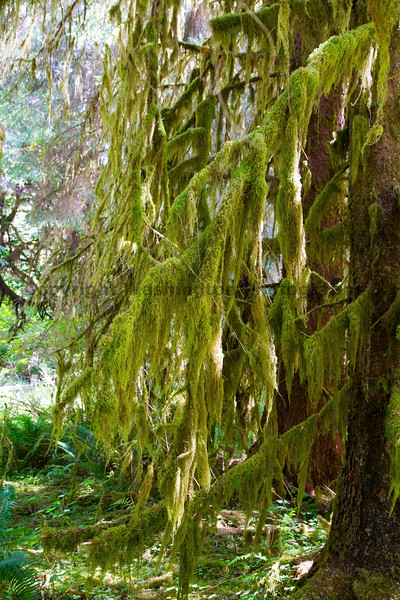 Hoh Rain Forest 13