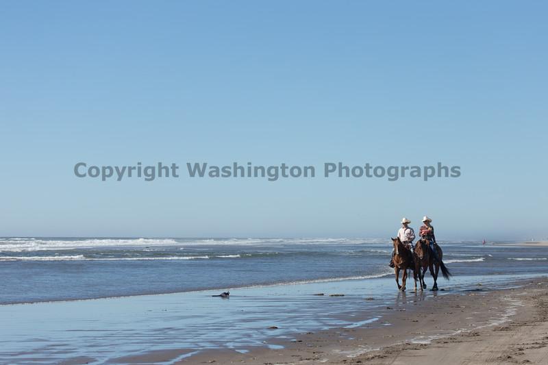 Long Beach Horseback Riding 34