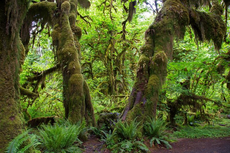 Hoh Rain Forest 136