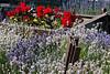 Lavender Farm 192
