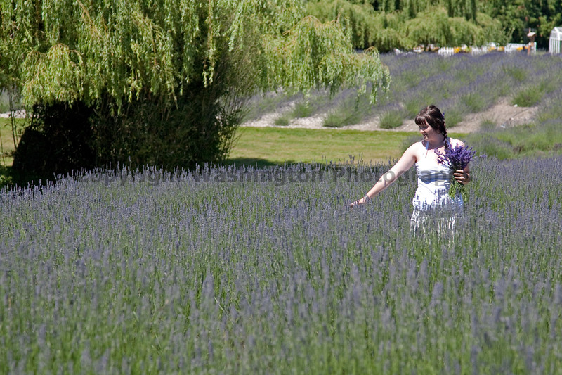 Lavender 19