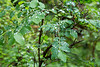 Hoh Rain Forest 102