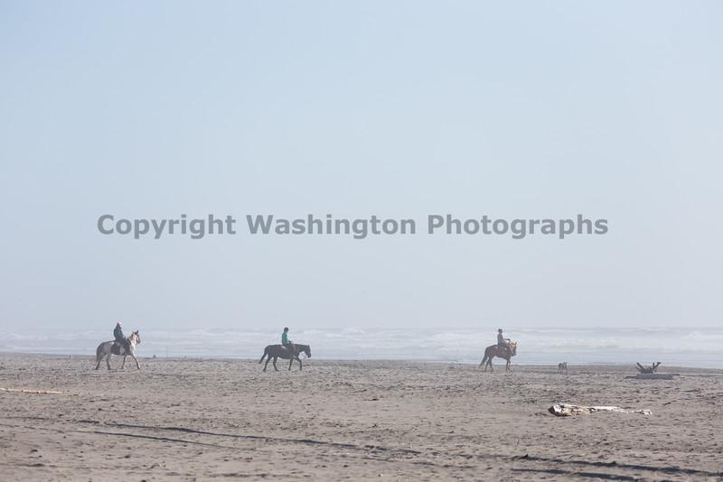 Long Beach Horseback Riding 11