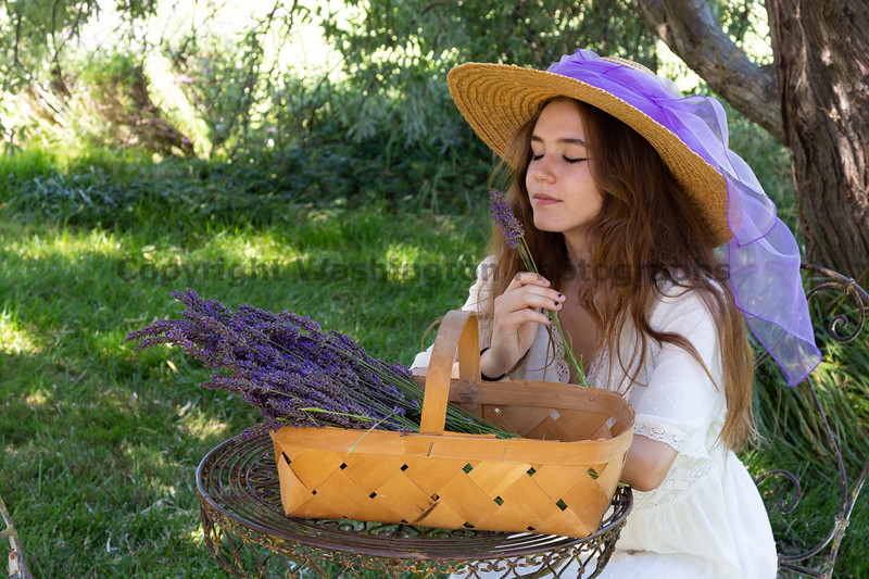 Lavender Farm 297