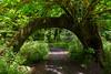 Hoh Rain Forest 130