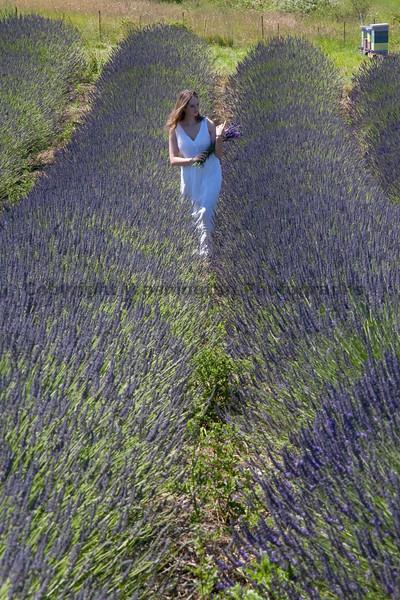 Lavender 24