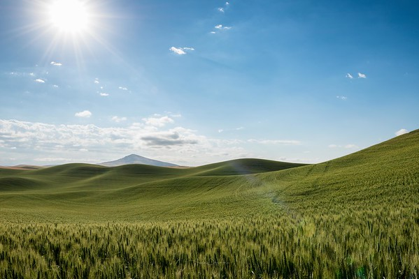 Whitman County Morning Views ~ Washington