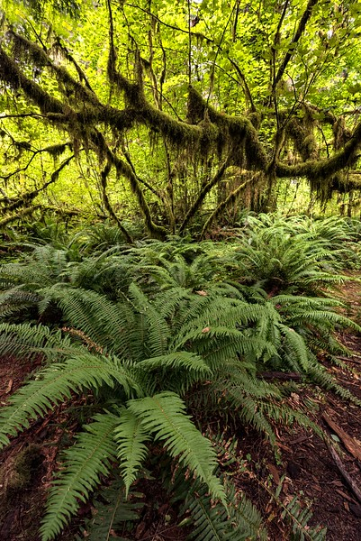 Ferns for Days