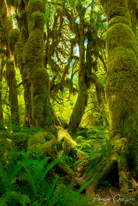 Moss Grows Through It
