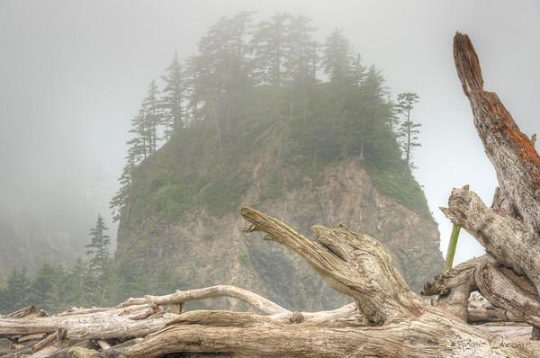 The Fog, First Beach, Olympic National Park