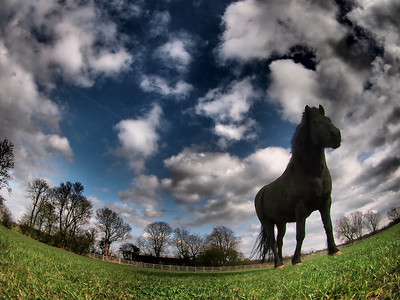 April 01 2011. Horse in field, at base camp captured with Oly E5 and 8mm fisheye using dramatic tone art filter.