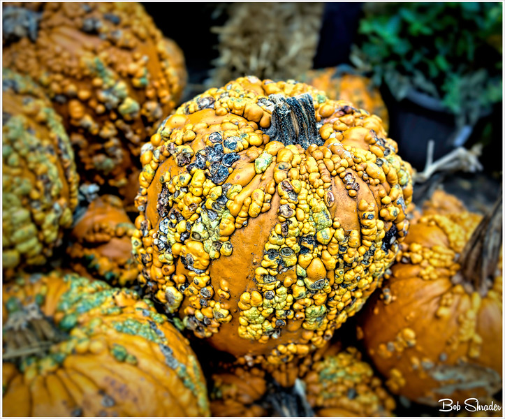 A Pile of Gourds