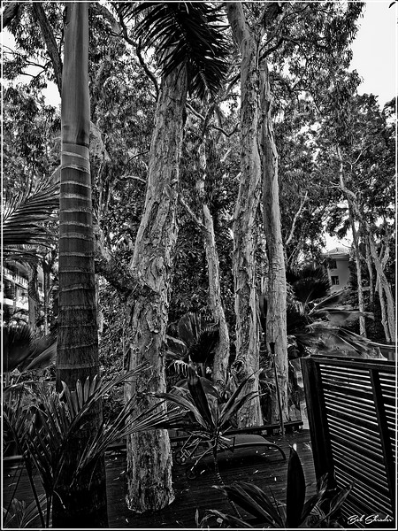 Topical Tropical Trees
