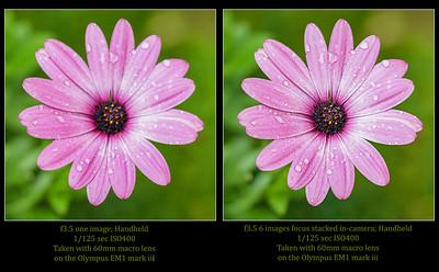 70030_FS_versus nonFS062720_131434_EM1M3L_O768