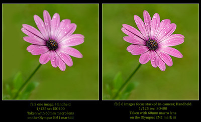 70017d_FS-versus nonFS_PS062720_131409_EM1M3L_O768