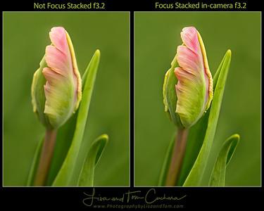 21761-70w FS versus nonFS