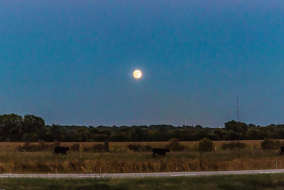 Full moon over a pasture