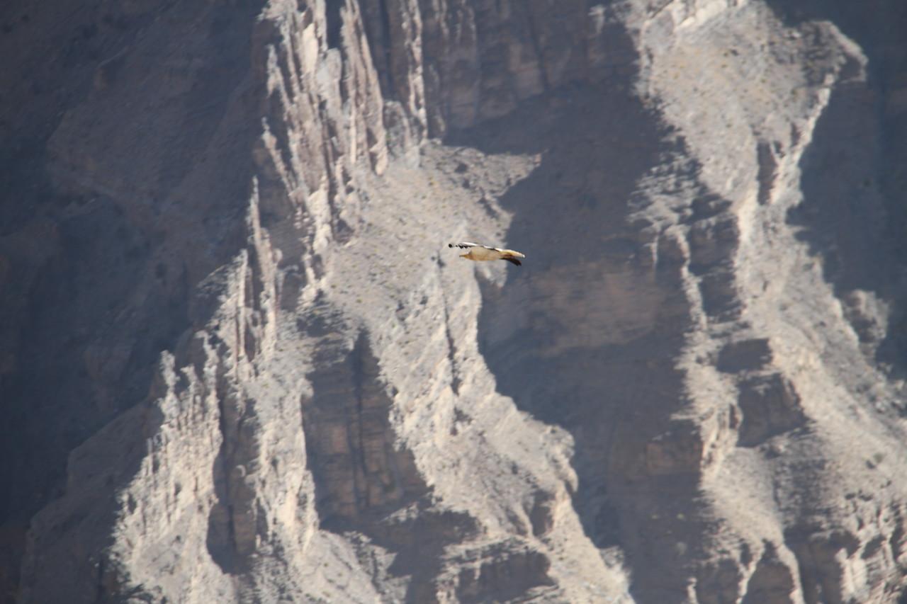 a.k.a The Arabian Grand Canyon - 3000m gorge