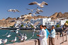 Local people feeding sea gulls at the harbourfront of Muscat, Oman.