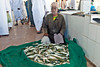 Omani man sitting with his catch, waiting for people to purchase from him at the Barka Fish Market.