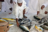 Omani man looks over the fish for auction at the local Barka Fish Market.