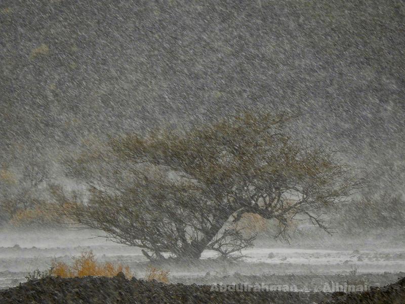 Painter Rain