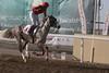 Bashair Muscat (Amer x AF Mutawakelah) wins