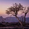 Jabal Shams Trees