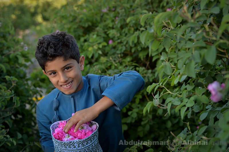 Mohammed Picks Roses